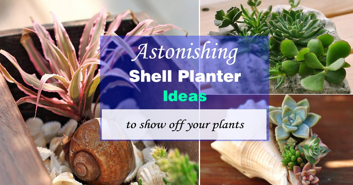 Famous Sea Shell Planter Ideas to Show Off your Plants | Ideas for  JI01