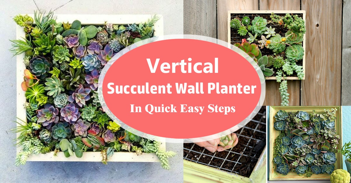 Vertical Succulent Wall Planter In Quick Easy Steps Diy Frame Balcony Garden Web