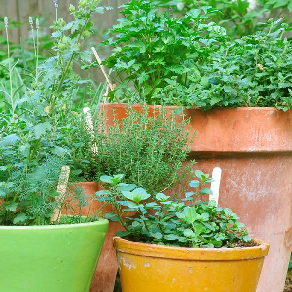 Urban Herb Garden Tips