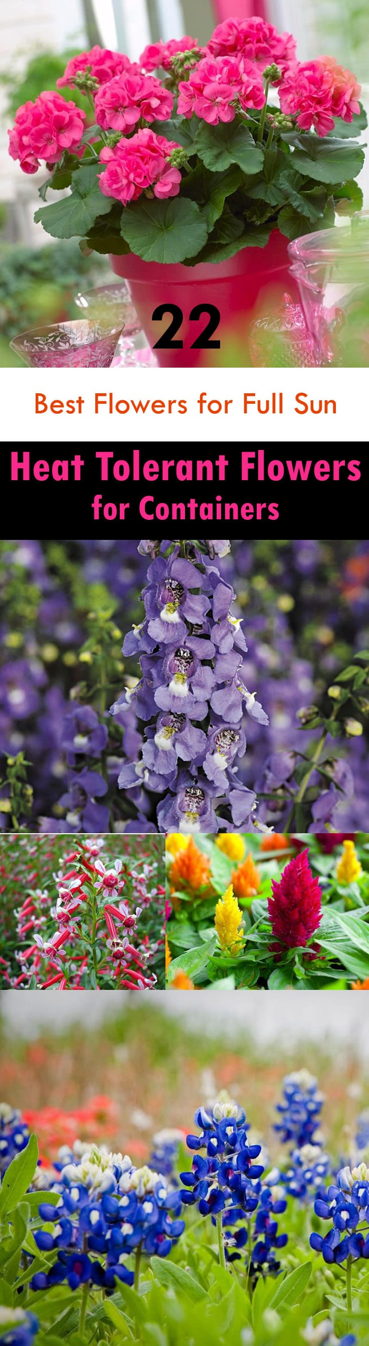 22 best flowers for full sun heat tolerant flowers for containers if youre searching for the best flowers for full sun then see our list izmirmasajfo