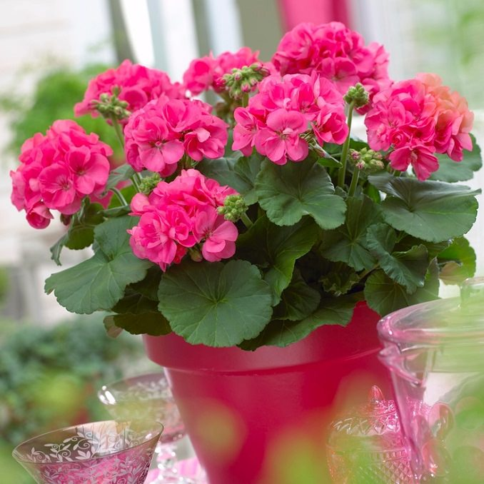 22 best flowers for full sun heat tolerant flowers for containers if youre searching for the best flowers for full sun then see our list mightylinksfo