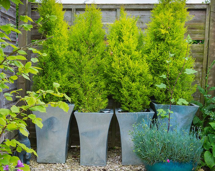 11 Most Essential Container Garden Design Tips | Designing ... on Tree Planting Ideas For Backyard id=89164