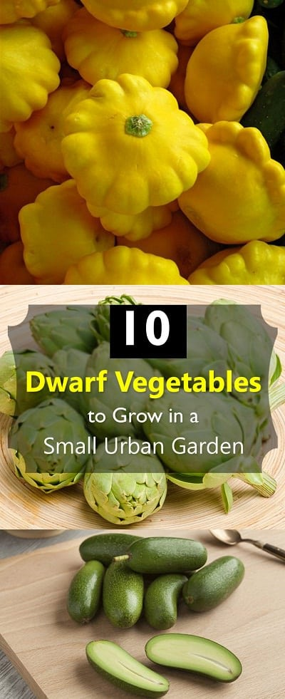 10 Dwarf Vegetables To Grow In A Small Urban Garden