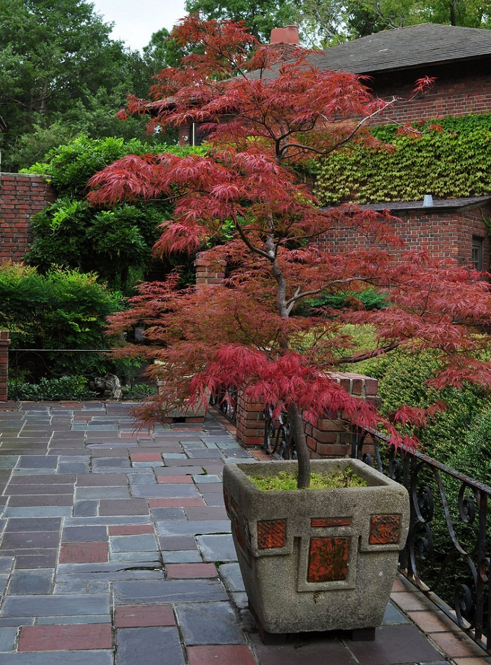 11 Most Essential Container Garden Design Tips | Designing ... on Tree Planting Ideas For Backyard id=64888