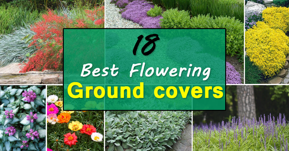 Roses In Garden: 18 Best Flowering Ground Cover Plants