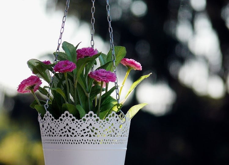 Flowers in a hanging pot