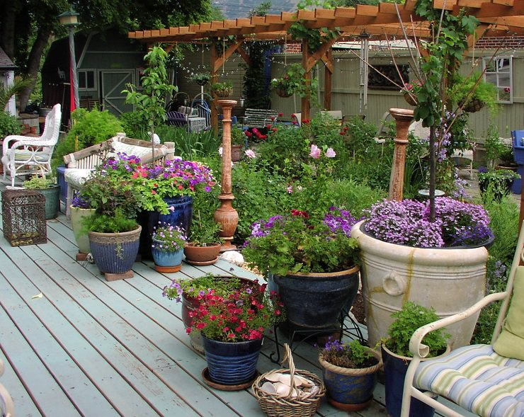 How Not To Kill Plants In Containers (3)