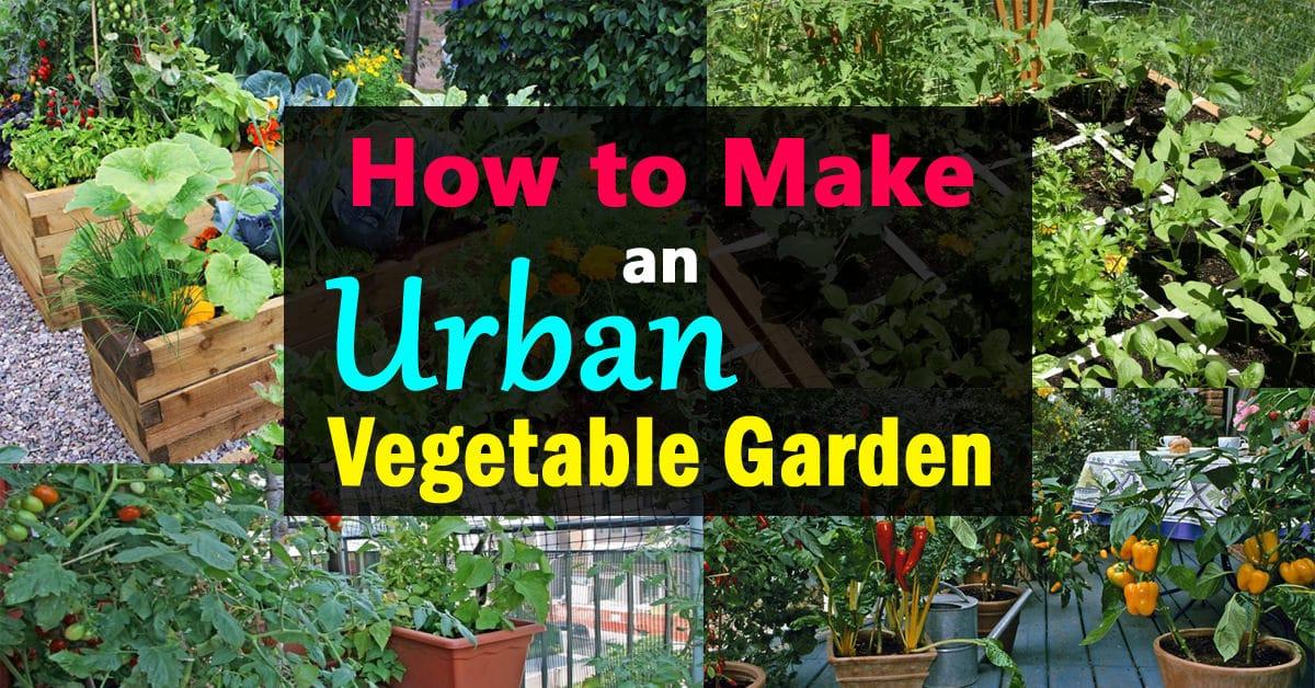 - How To Make An Urban Vegetable Garden City Vegetable Garden