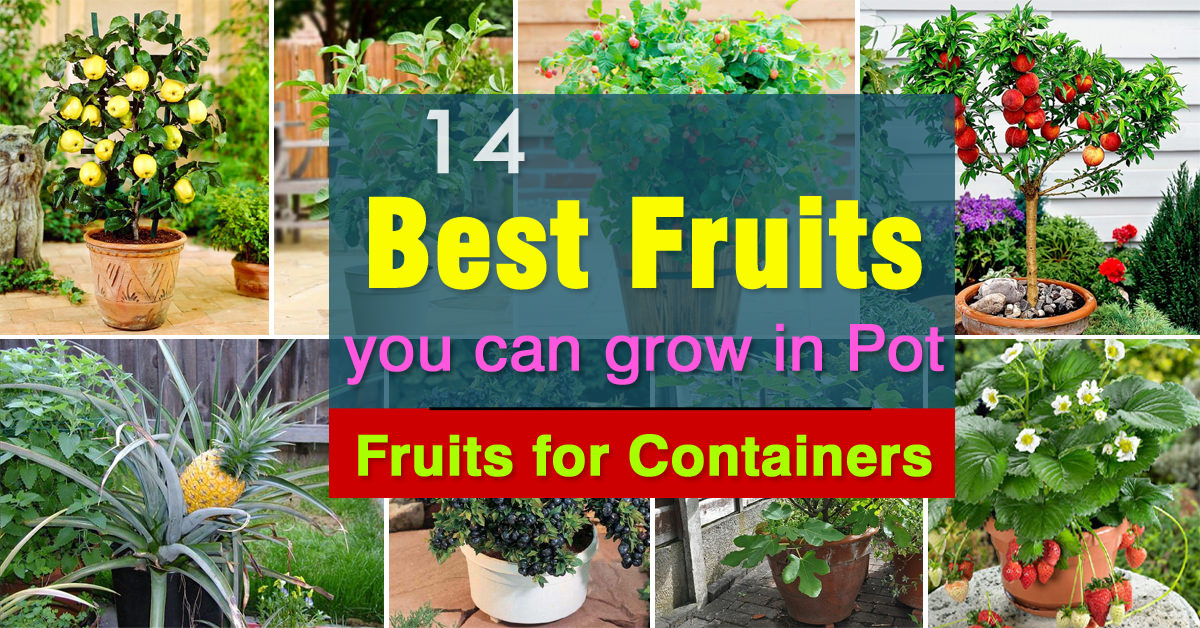 Best Fruits To Grow In Pots For Containers