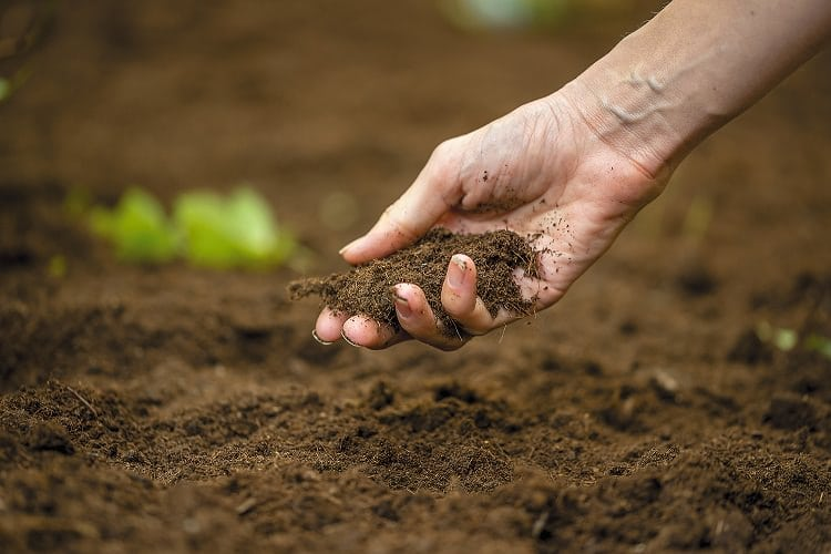 how to get acidic soil