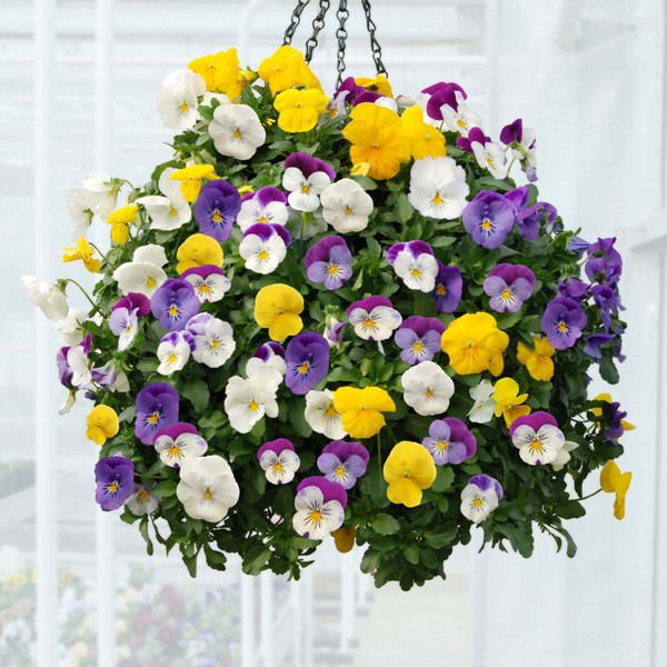 10 of the Best Plants for Hanging Baskets - gardenersworld.com