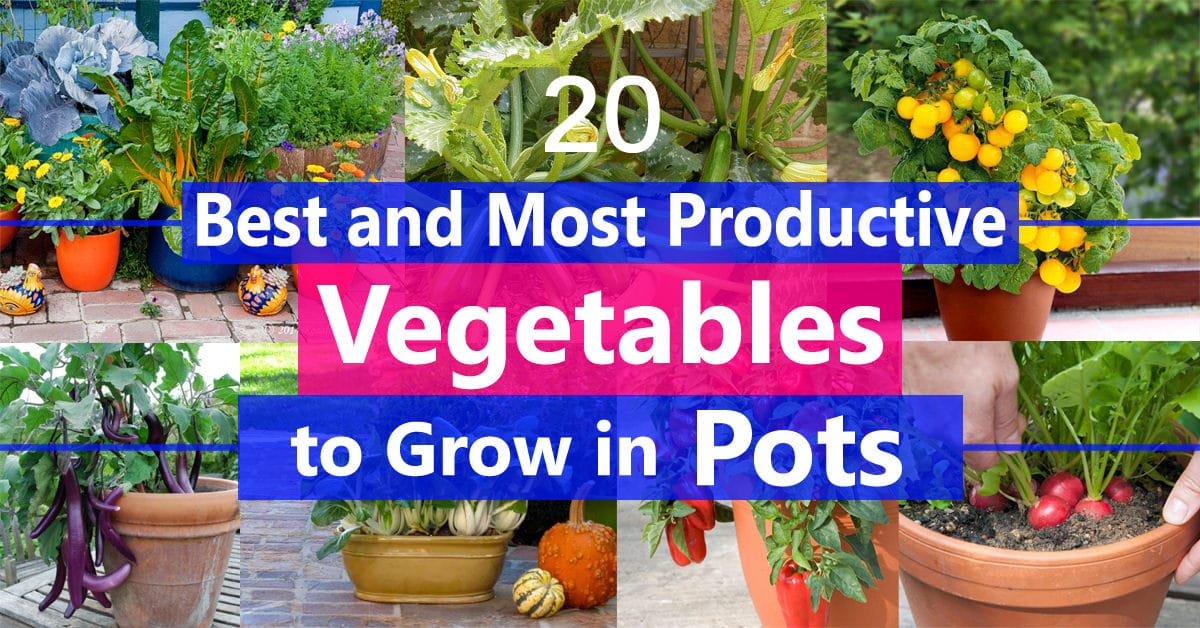 Best Vegetables To Grow In Pots Most Productive For Containers Balcony Garden Web