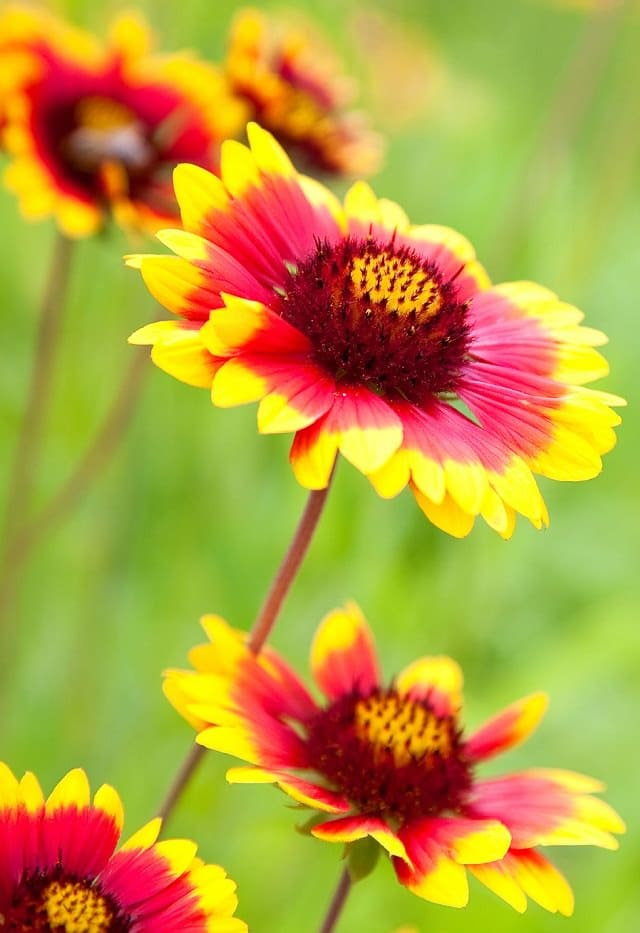 Ground Cover Plants Full Sun: 24 Best Drought Tolerant Plants That Grow In Lack Of Water
