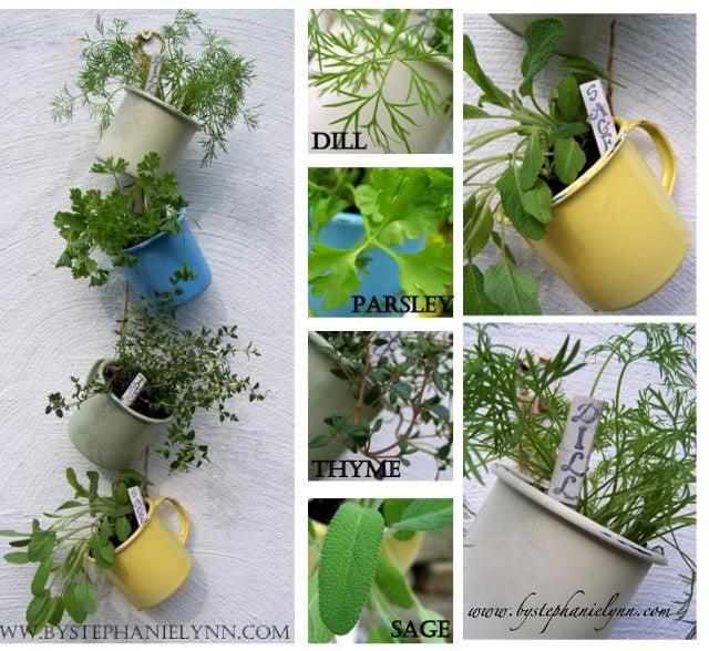 tea-cup-herb-garden