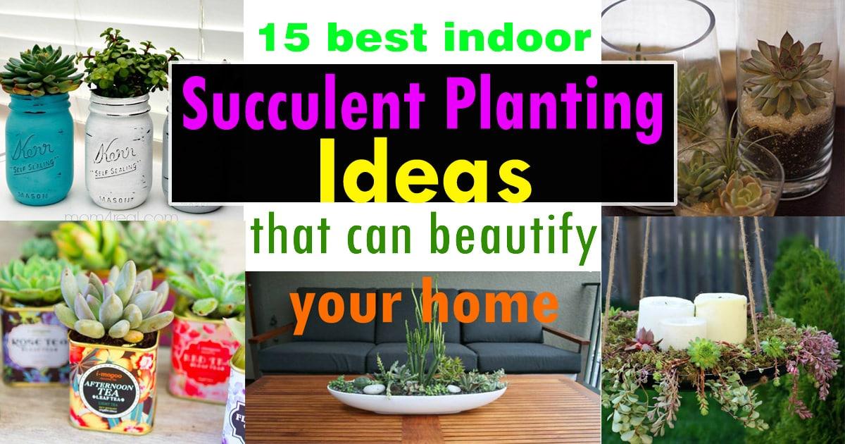15 best indoor succulent planting ideas that can beautify your home balcony garden web - Indoor Succulent Garden