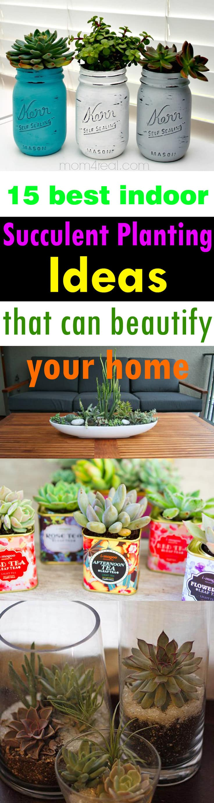 growing succulents indoors can add a touch of beauty to your home also they - Indoor Succulent Garden