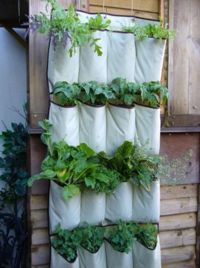 A Hanging Shoe Organizer Is Perfect For Your Vertical INDOOR Garden. Its  Pockets Are The Ideal Size For Growing Individual Plants And Herbs.
