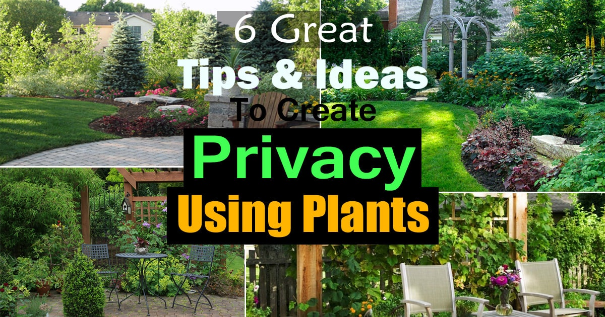6 Great Tips And Ideas To Create Privacy Using Plants