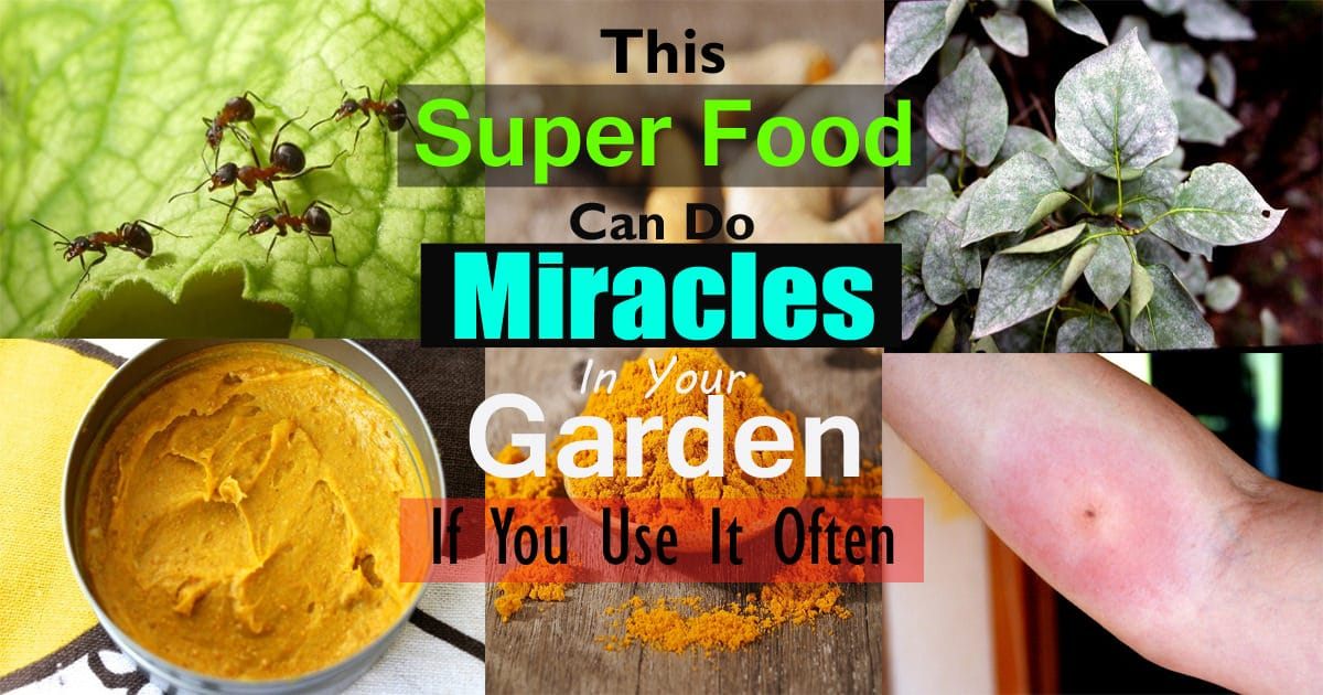 4 Unknown Turmeric Uses That Can Help You In The Garden | Balcony