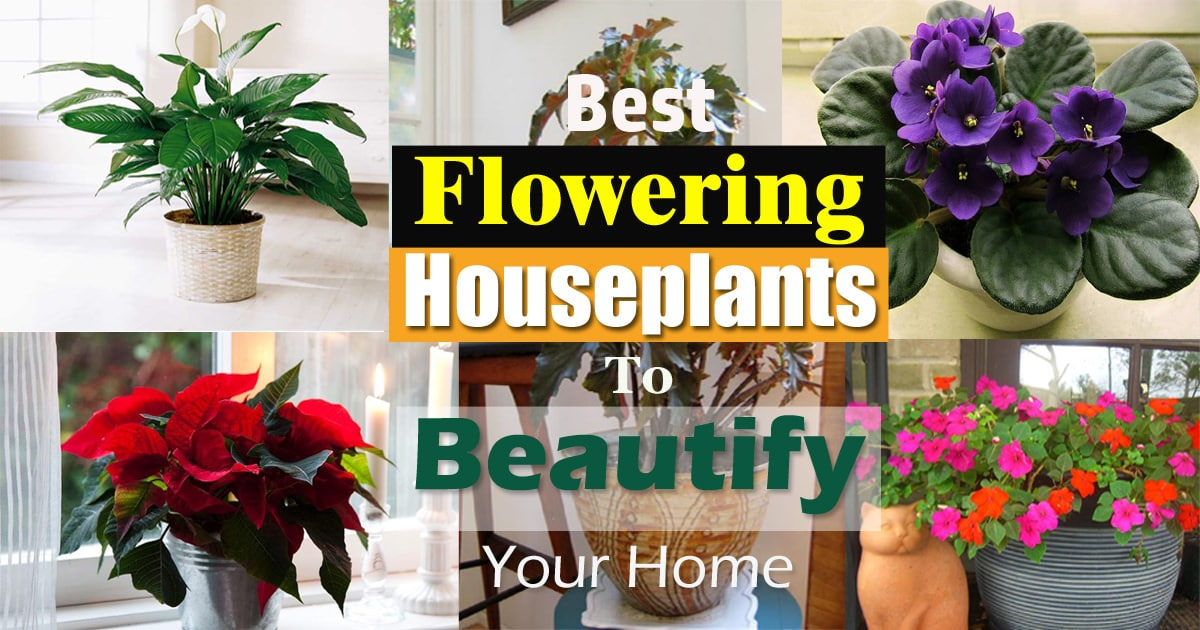 17 Best Flowering Houseplants | Balcony Garden Web Flowers House Plants on flower gardening, flower fertilizers, flower cooking, flower eggs, flower house florist, flower seedlings, flower greenhouse, red tropical plants, flower animals, flower floral arrangements, flower perennials, flower tools, flower home, flower house garden, flower bonsai, flower soil, flower flowers, flower succulents, flower nurseries, flower insects,
