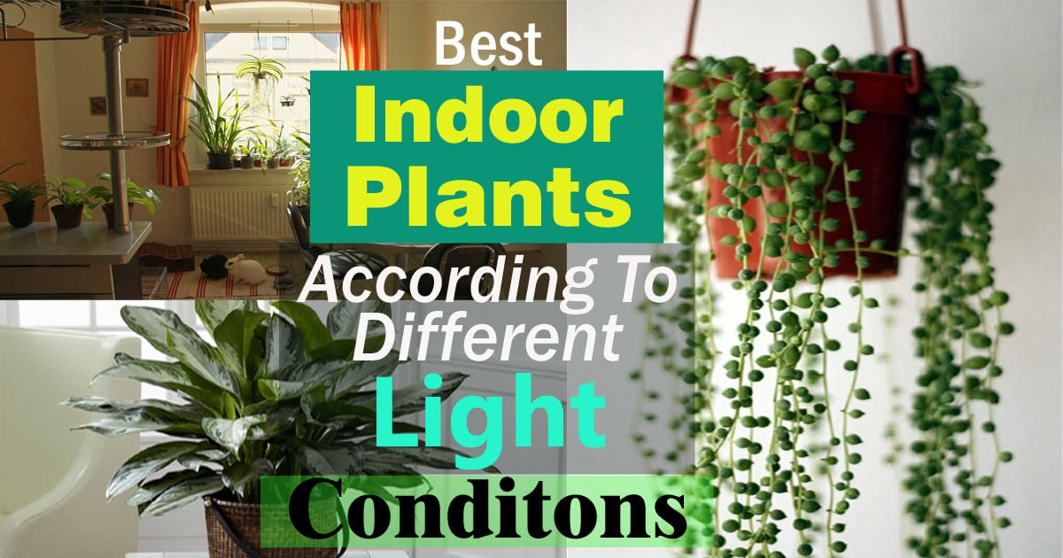 indoor plants that like direct sunlight best houseplants best indoor plants according to different light conditions