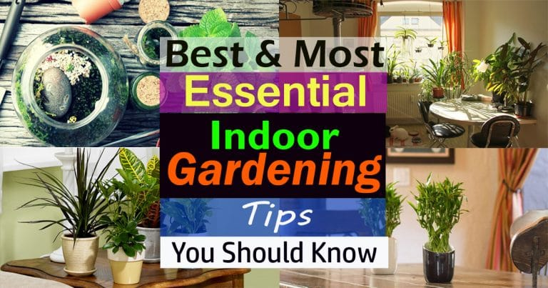 Best & Most Essential Indoor Gardening Tips You Should Know
