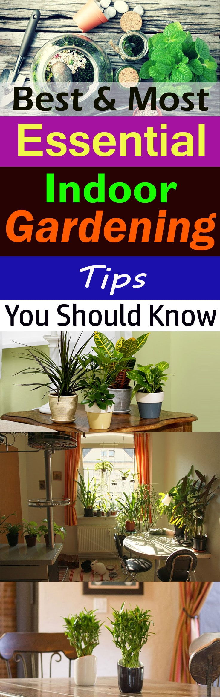 Whether you want to make an indoor garden or you already have one-- Check out some of the best & most essential indoor gardening tips for help!