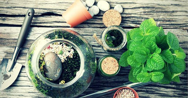 feature-image-indoor-plants-1
