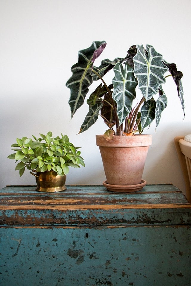 29 Most Beautiful Houseplants You Never Knew About