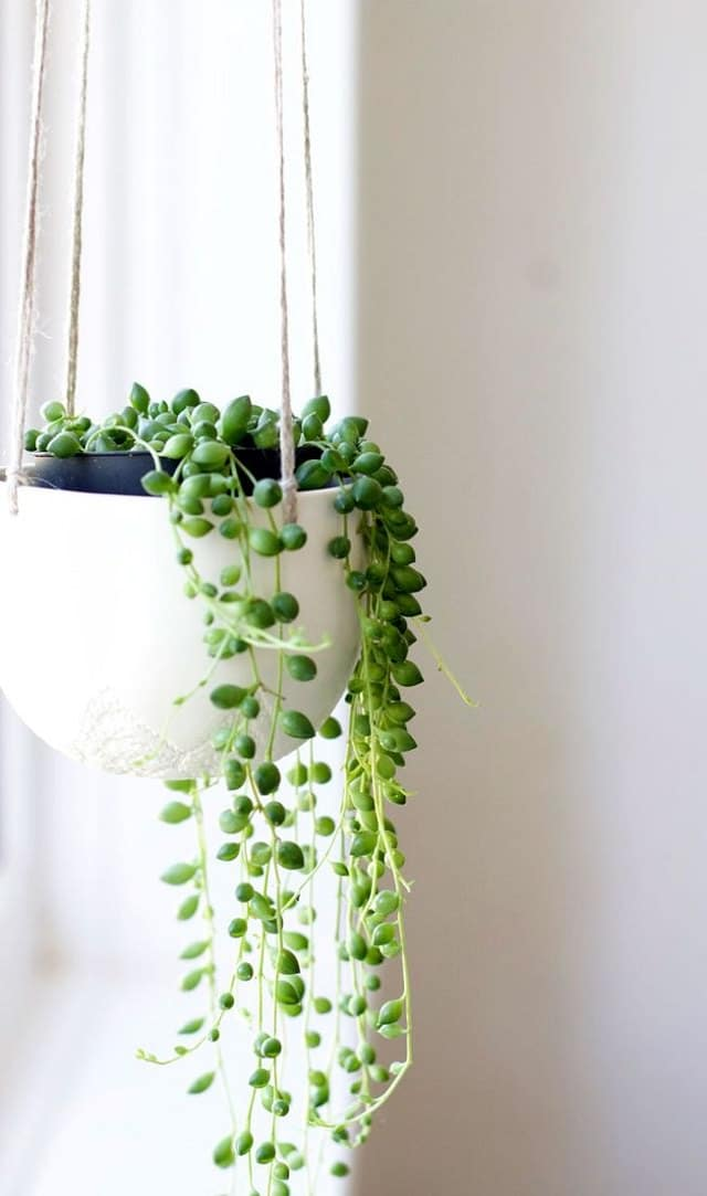29 Most Beautiful Houseplants You Never Knew About | Balcony Garden Indoor House Plants Basket on indoor plant cage, indoor plant watering can, indoor plant cart, indoor plant box, indoor plant trellis, indoor plant ladder, indoor plant cabinet, indoor plant trough, indoor plant stool, indoor plant vase, indoor plant with lights,