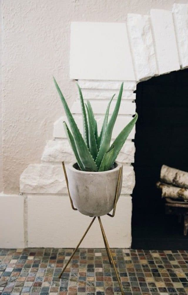 aloe-on-indoor-plant-stand