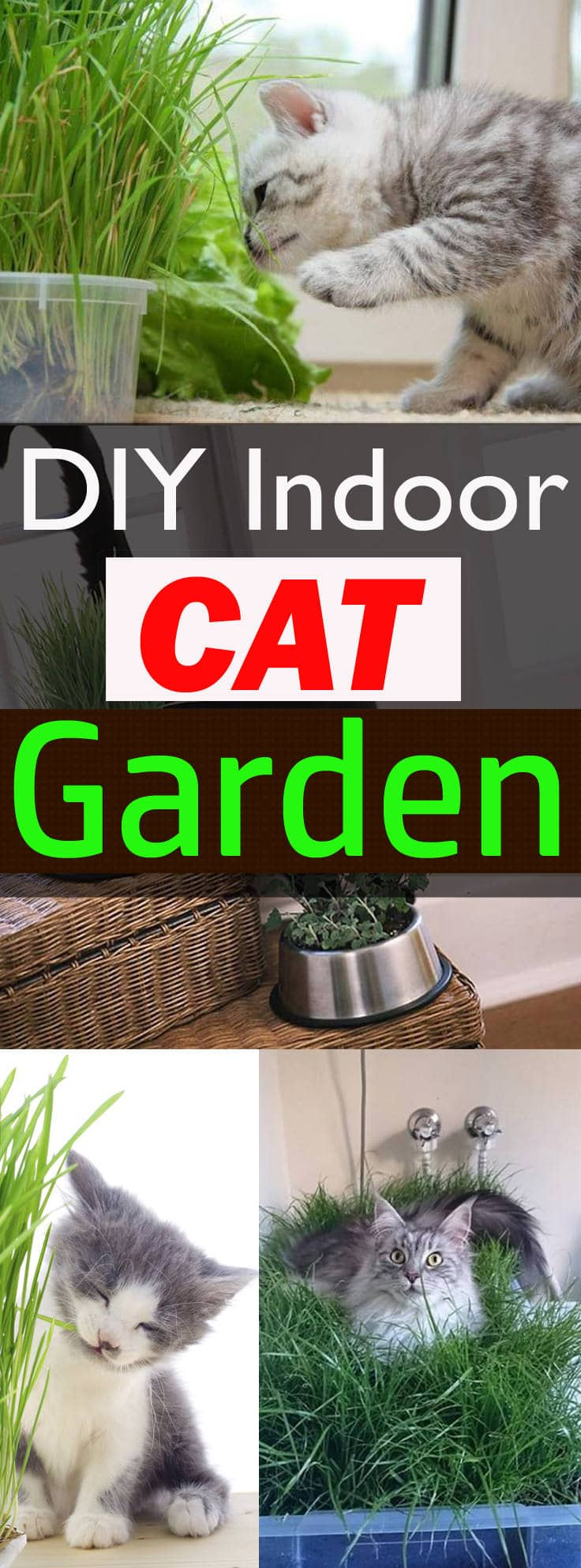 If You Love Your Cat, Itu0027s A Good Idea To Make An Indoor Cat Garden