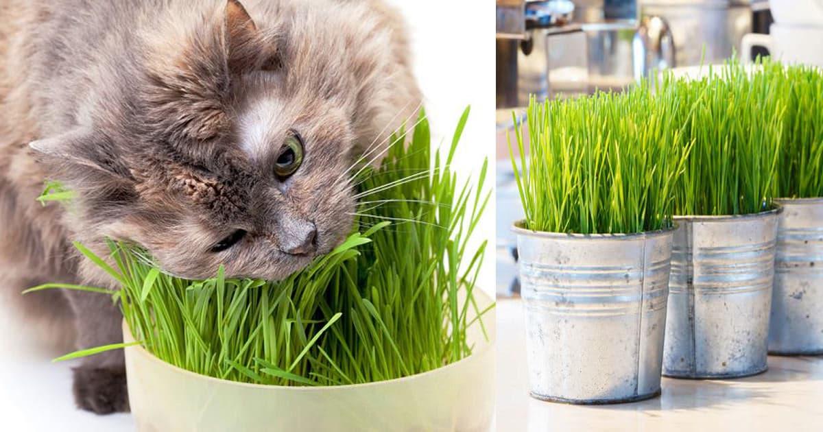 Growing Cat Gr Indoor 1