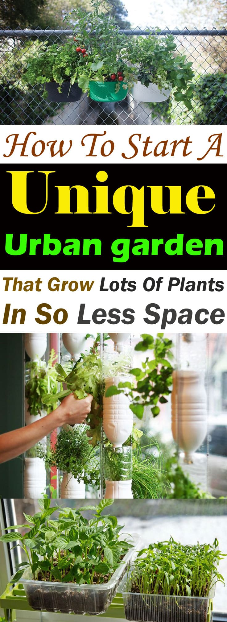 To Start An Urban Garden, You Need The Right Tools, Ideas, And Some