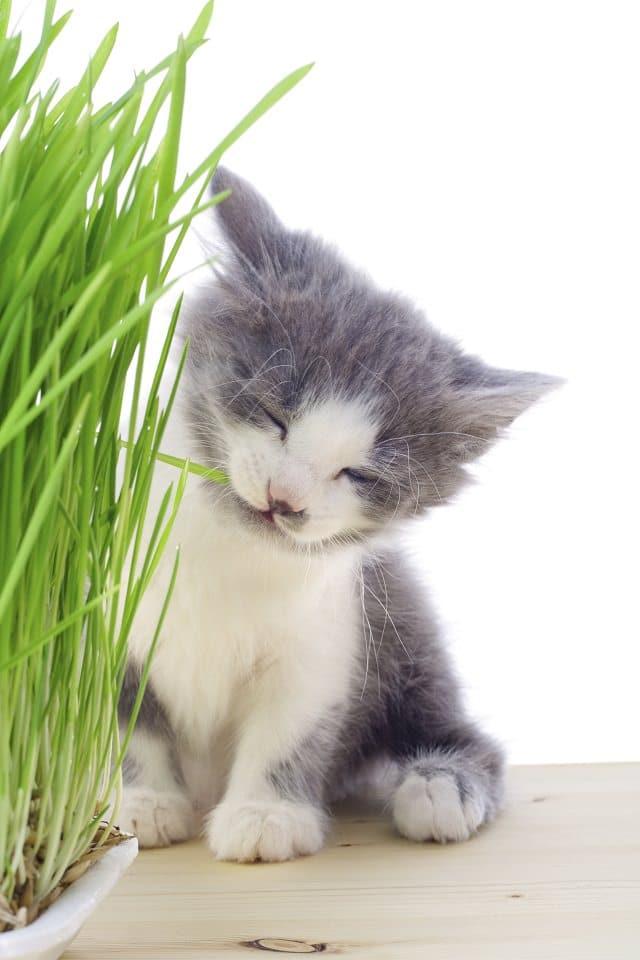 Diy Indoor Cat Garden For Cat Lovers Balcony Garden Web