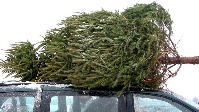 after all the fun and excitement of christmas the time comes when you need to dispose of your christmas tree and herere the 9 ideas to recycle it