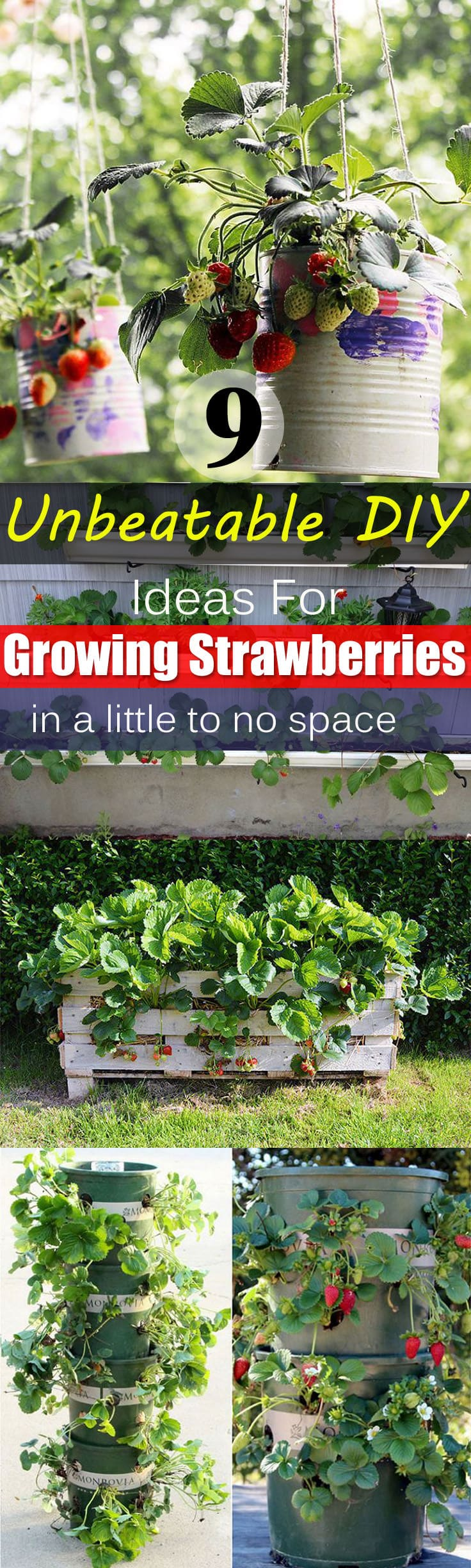 Vertical beds for strawberries from plastic bottles. Handmade high beds for strawberries 71
