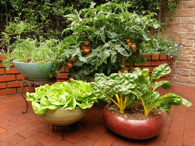 Full Sun Vegetable Garden Layout