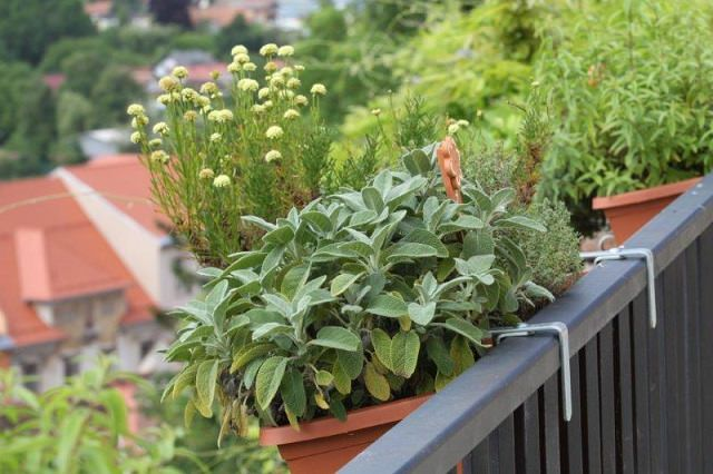 herbs in railing planters