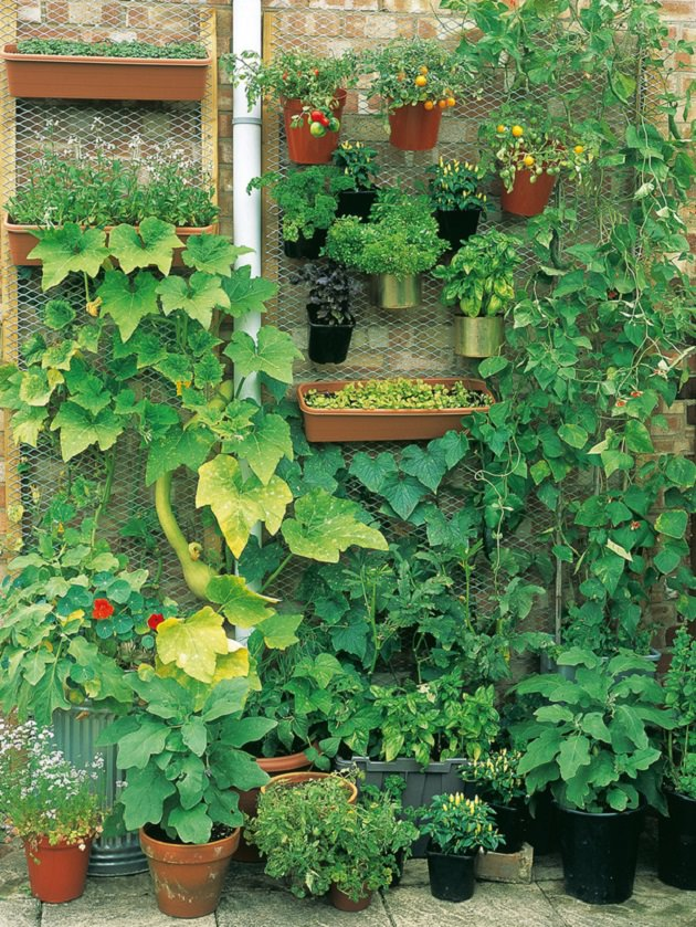 10 Creative and Trendy Container Garden Ideas You'll Love ... on Vegetable Garden Ideas For Backyard id=97693