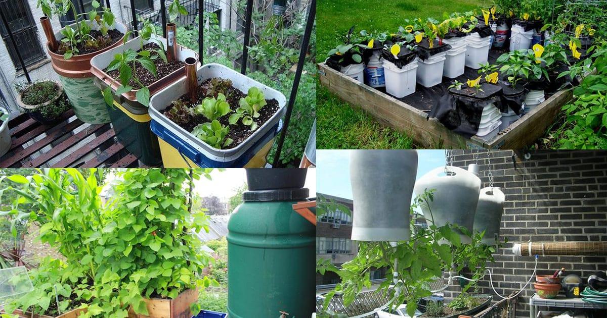 14 Best DIY Self-Watering Container Garden Ideas | Balcony Garden Web