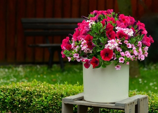 how to grow flowers in containers