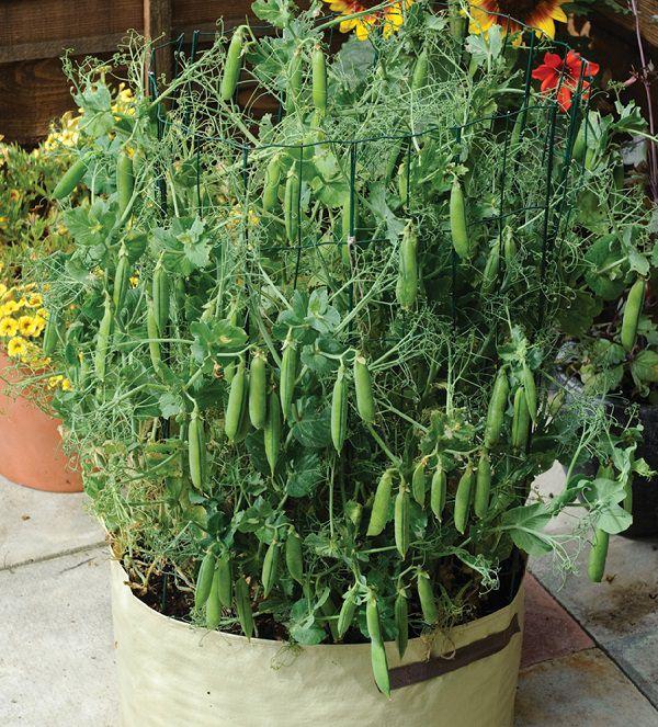 Image Result For Vining Garden Vegetables