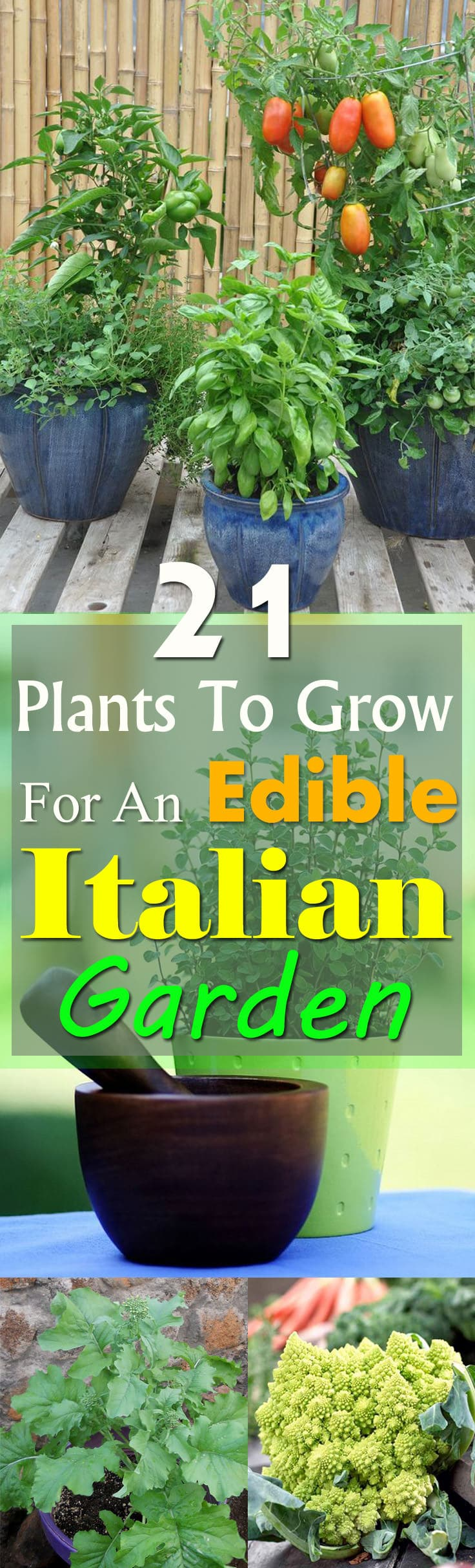 If you love Italian food, grow an Edible Italian Garden to have a fresh supply of tastiest vegetables and herbs. Even if you're short of space, you can grow them in containers!