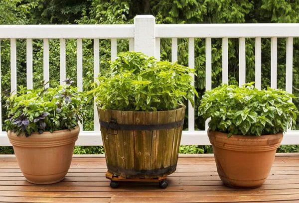 Menu For Olive Garden: 21 Plants To Grow For An Edible Italian Garden