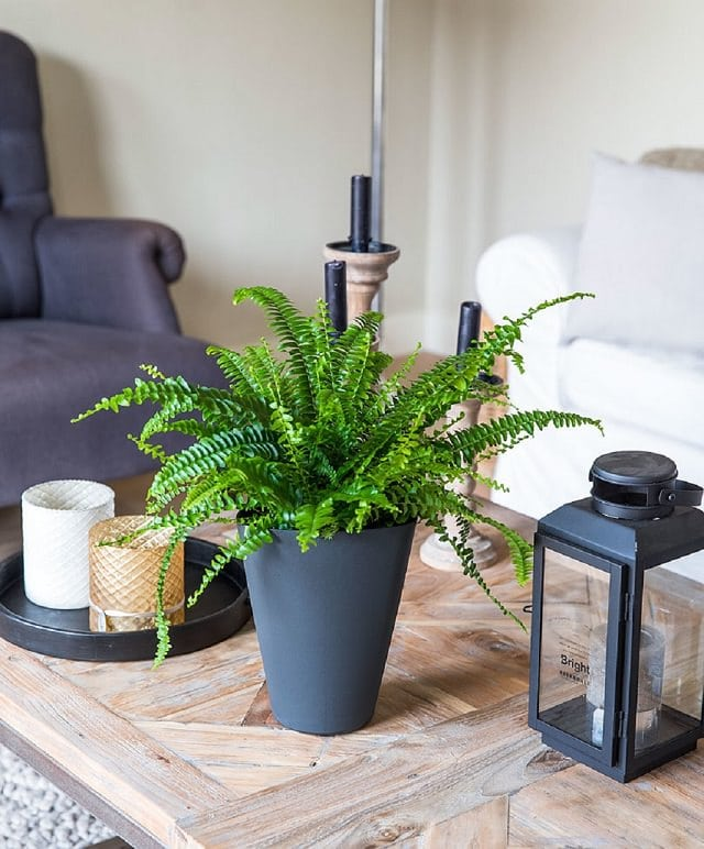 Best Plants That Reduce Humidity Indoors Balcony Garden Web