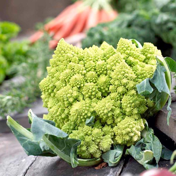 Romanesco Broccoli in conatiners
