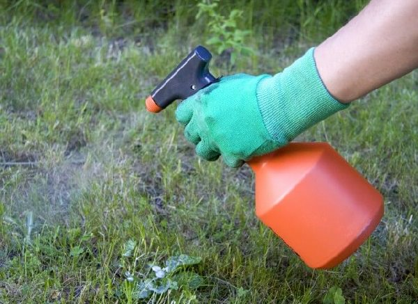 Citrus Oil for Killing Weeds