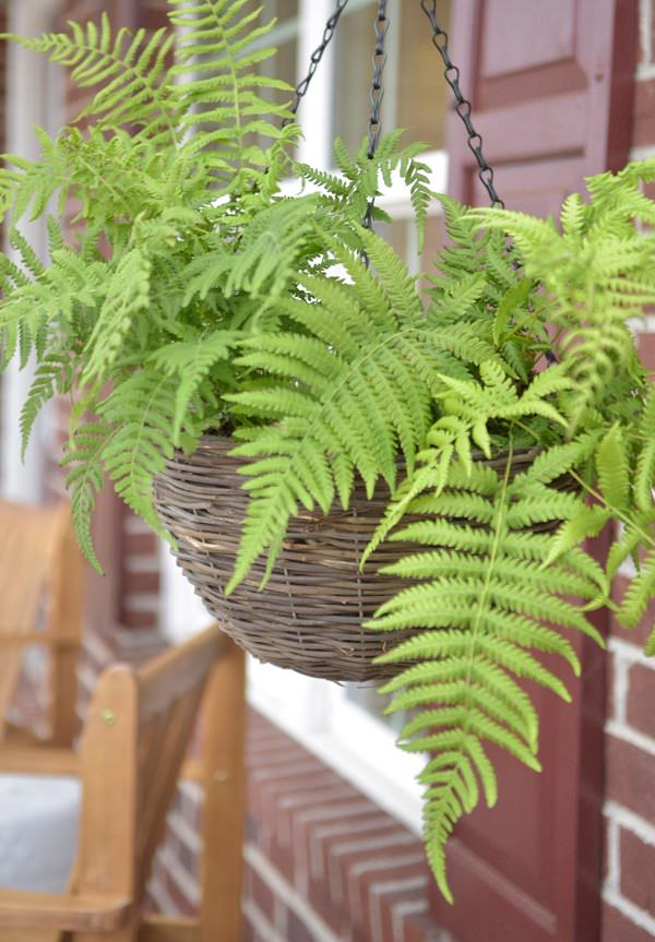 Shade Plants For Porch