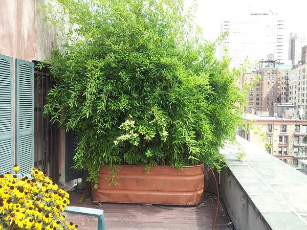 26 DIY Garden Privacy Ideas That Are Affordable ... on Tree Planting Ideas For Backyard id=11820